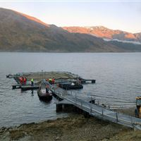 Mobile pen in Loch Shiel getting ready to transfer smolts
