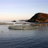 Isle of Ewe salmon farm, Ross-shire