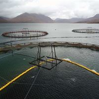 Loch Torridon salmon farm – preparing to crowd the fish using a float line