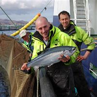 First harvest from Hellisay salmon farm, Isle of Barra