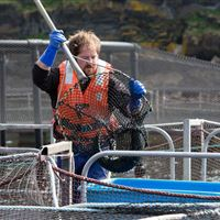Fish Sampling Port na Cro Argyll
