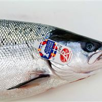 Marine Harvest Label Rouge Scottish Salmon